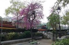 A Primavera se instala com suas cores e boas temperaturas