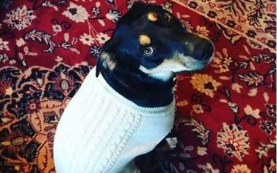 O cão Sully vive em Utah, oeste dos Estado Unidos com seus donos (Foto: Reprodução/Redes Sociais)
