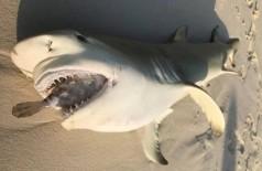 O registro do tubarão morto foi feito em uma ilha pertencente às Maldivas, banhadas pelo Oceano Índico - Divulgação/Lauren Arthur