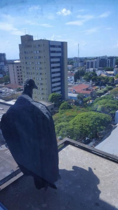 Calorão superior a 38 graus castiga quem mora ou está de passagem por Dourados (Foto: André Bento/Arquivo)