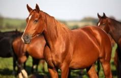 Empresário compra cavalo por R$ 33 mil, não paga e ameaça vendedor de morte