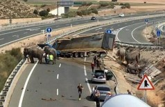 Caminhão de circo tomba na estrada e deixa um elefante morto na Espanha (Reprodução/Twitter)