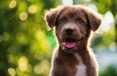 Empresa dá licença paternidade para quem adotar pets (Foto: blanscape/Thinkstock)