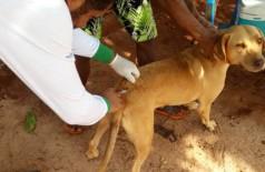 Somente animais doentes não devem ser vacinados. - Foto– CCZ/Divulgação