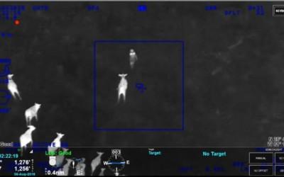 O rebanho de vacas foi essencial para ajudar a polícia a capturar a fugitiva e seus companheiros de crime (Foto: Reprodução/Youtube)
