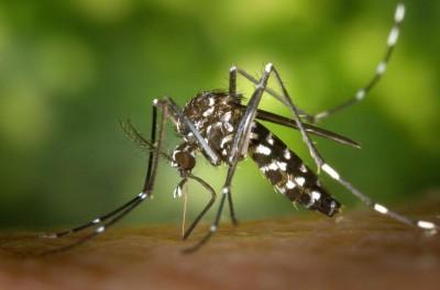 São 84 casos confirmados de chikungunya  e 23 da dengue em Dourados em 2018 - Foto: Pixabay