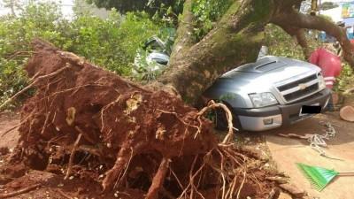 Plano Diretor de Arborização pode prevenir acidentes como esse, ocorrido após ventania no dia 19 de outubro de 2017 (Foto: Arquivo/94FM)