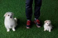 China: amostras de pele do cão foram coletadas e seu DNA foi isolado e fertilizado em um óvulo (Jason Lee/Reuters)