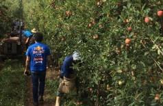 Funtrab recadastra indígenas para trabalhar na colheita de maçã em SC e RS (Foto: Subcom)