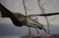 Pterossauros tinham penas em tom castanho-avermelhado, revela pesquisa - Foto: Pixabay