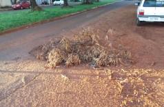 Moradores usaram galhos de árvore para sinalizar buraco no meio da rua (Foto: Karol Chicoski/94FM)