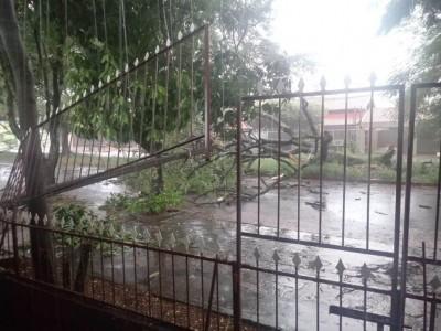 Grade de muro destruída e árvore caída no BNH 2°  (Foto: reprodução/ouvinte 94FM)
