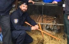 A tigresa foi levada por policiais a um abrigo para animais de Houston - Foto: Reprodução/Twitter(City of Houston)