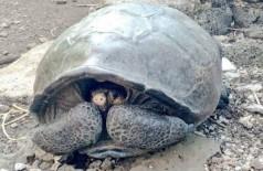 Tartaruga gigante achada no Equador - Foto: Reprodução/Twitter