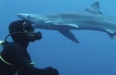 Tubarão 'beija' a cabeça de cientista na África do Sul - Foto: Reprodução/Instagram(steve_woods_photography)