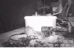 Foto: Reprodução de 'House-proud mouse caught on camera tidying garden shed | SWNS TV'/YouTube