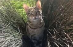 A gatinha Miska de 10 anos já teve problemas com as autoridades locais mais de 30 vezes