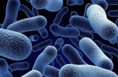 O organismo artificial é uma versão simplificada da bactéria Escherichia coli (IStock/Getty Images)