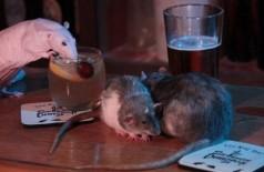 Ratos curtem uma noitada em bar de São Francisco Foto: Reprodução/Facebook(The San Francisco Dungeon)