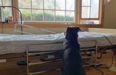 Moose espera o retorno do dono, que nunca acontecerá Foto: Reprodução/Facebook(Eleventh Hour Rescue)