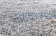 Gramados amanheceram com uma fina camada de gelo (Foto: divulgação/ouvinte 94FM)