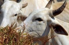 IBGE: cresce abate de bovinos, suínos e frangos (Foto: Arquivo/Agência Brasil)