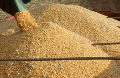Produção estimada em 11,475 milhões de toneladas é recorde histórico no Estado (Foto: Divulgação/Famasul)