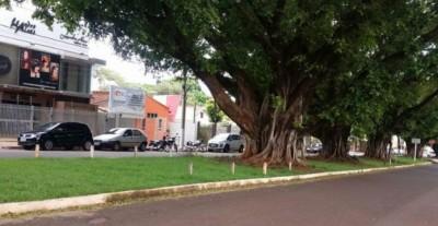 Na Rua João Cândido Câmara ficam 12 figueiras tombadas como patrimônio em Dourados (Foto: 94FM/Arquivo)