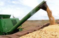Safra recorde de milho tem aumento de 64% e fecha em 12,16 milhões de toneladas (Foto: Arquivo/Agência Brasil)