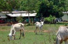 Animais estavam debilitados - Fotos: PMA