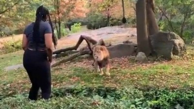 Mulher que invadiu áreas de leão e girafas em zoo é presa