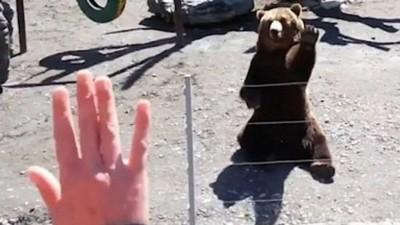 Urso acena de volta para visitante de zoo - Foto: Reprodução/YouTube