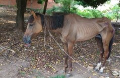Égua foi encontrada em situação de maus-tratos pela PMA em Corumbá - Foto: Divulgação/PMA