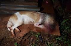 Cadela é morta a pauladas enquanto procurava comida em lixo de moradora (Foto: ONG Abrigo dos Bichos)