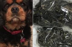Lottie e as centenas de elásticos retiradas do seu estômago - Foto: Reprodução