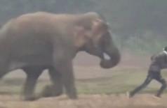 Elefante persegue homem na Índia: sem selfie - Foto: Reprodução/YouTube