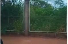 Matagal no Parque Rego D'Água - Foto: reprodução/vídeo
