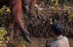 Foto: Reprodução/Borneo Orangutan Survival Foundation/Anil Prabhakar