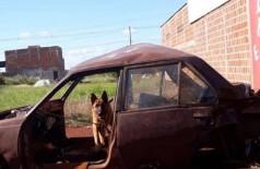 Cachorro será encaminhado para instituição protetora de animais (Foto: Reprodução/Facebook Encontro de Patinhas)