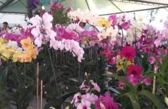 Feira de Flores acontece até o dia 15 de março e é aberto ao público de 8h às 20h na Praça Antônio João (Foto: Divulgação)