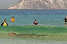 Elefante-marinho nadou em meio aos surfistas - Foto: Reprodução Instagram / @helenabarretophoto
