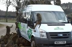 Macacos armados com facas e furadeiras atacam turistas em safari (Foto: reprodução)