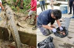 Restos mortais de adolescente são achados dentro de crocodilo de 4,3 metros (Foto: reprodução)