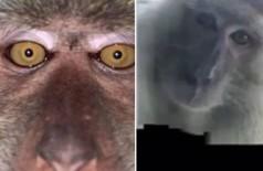Selfies de macaco após furtar smartphone Foto: Reprodução/Facebook(Zackrydz Rodzi)