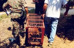 Animais foram recolhidos - Foto: PMA