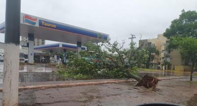 Árvore cai e fecha rua Joaquim Teixeira Alves