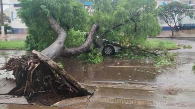 Durante temporal, carros são atingidos por queda de árvores