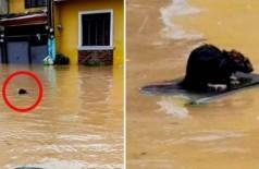 Rato 'surfa' para escapar de enchente (Foto: Reprodução/Twitter)