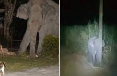 Simba encara elefante de 4 toneladas (Foto: Reprodução/YouTube)