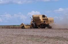 Valor Bruto da Produção Agropecuária deve crescer 4,2% (Foto: Agência Brasil)